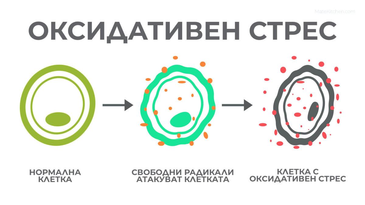 Процес за достигане на клетка до състояние на оксидативен стрес