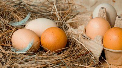 Яйца върху слама и в картонена подложка