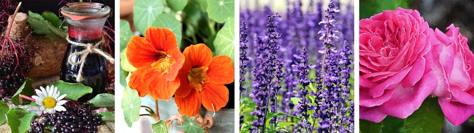 Колаж от 4 снимки на цветя, които стават за ядене: бъз, латинка, лавандула и маслодайна роза