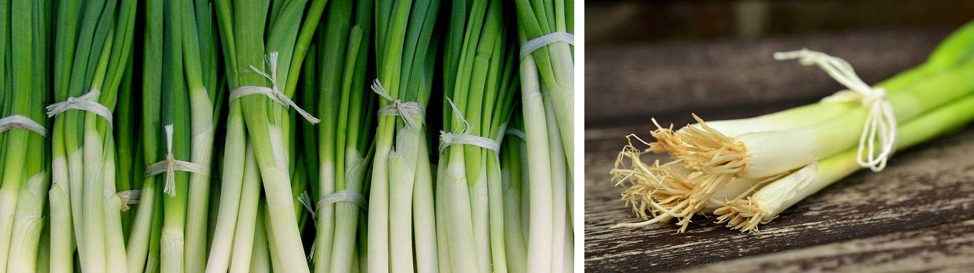 Колаж от две фотографии с свеж пролетен зелен лук