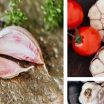 Колаж от 3 снимки на зрял чесън